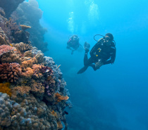 Scuba diving with Coral Sea Dreaming