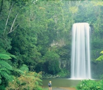 Visit the iconic Millaa Millaa Falls for a refreshing swim