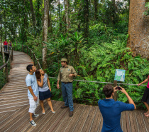 Choose from a range of iconic Kuranda activities including Skyrail, Kuranda Scenic Rail, Rainforest Army Duck tour, Pamagirri Aboriginal Experience, Koala & Wildlife Park & Kuranda Village.
