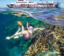 Snorkeling  at Moore Reef with Sunlover Reef Cruises