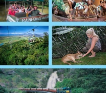 Train, Skyrail, Rainforestation & Butterfly Sanctuary (Grand Kuranda Experience)