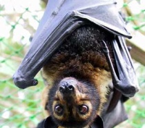 Tolga Bat Hospital