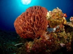 Healthy reefs found in the far northern GBR