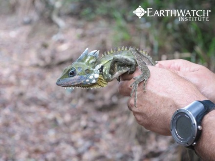 Wildlife of the Australia's Rainforest (7-15 days)