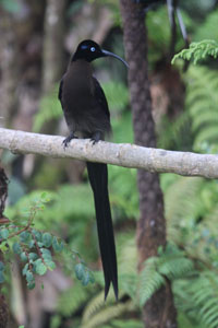 Cassowary Tours | Sicklebill Safaris